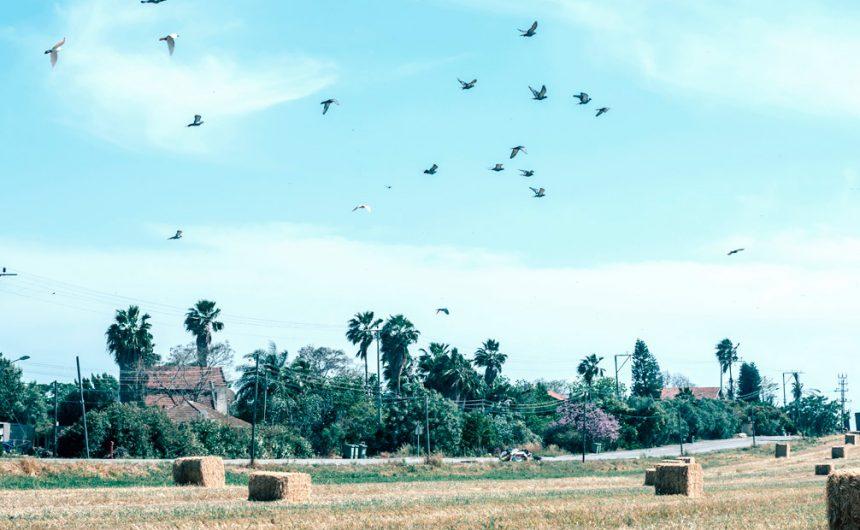 חקלאות הייטק
